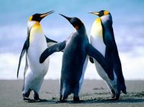 des-pingouins-187403
